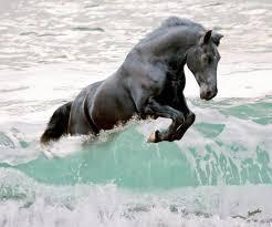 cheval eau